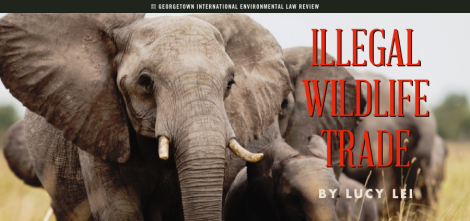 Lucy Lei - Illegal Wildlife Trade - without TUSKS